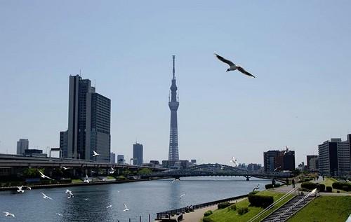 Tokyo Sky Tree, cada vez más cerca