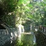 Todoroki, un secreto verde en el corazón de Tokio