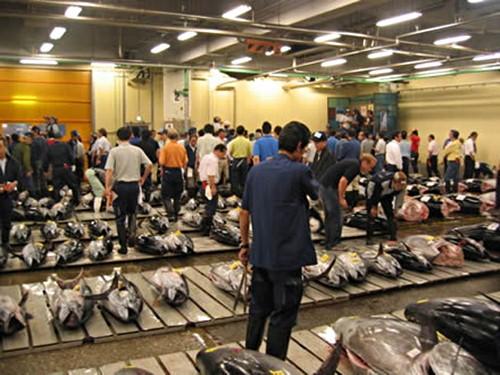 Subasta de los a tunes en Tsukiji